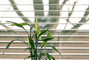 Plant in front of a window with a blind